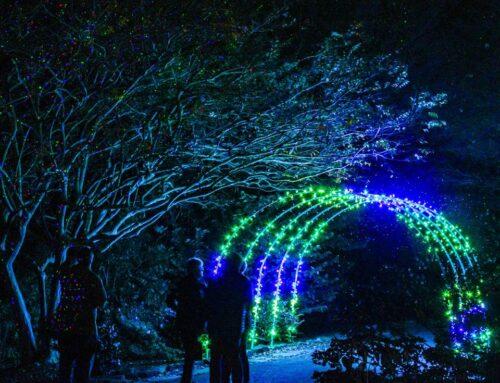 Galaxy of Lights returning to Huntsville Botanical Garden, here's how…